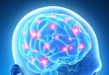 cervello-stagioni