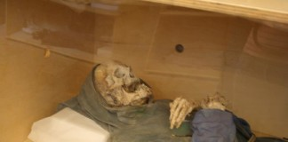mummiologia-324x160