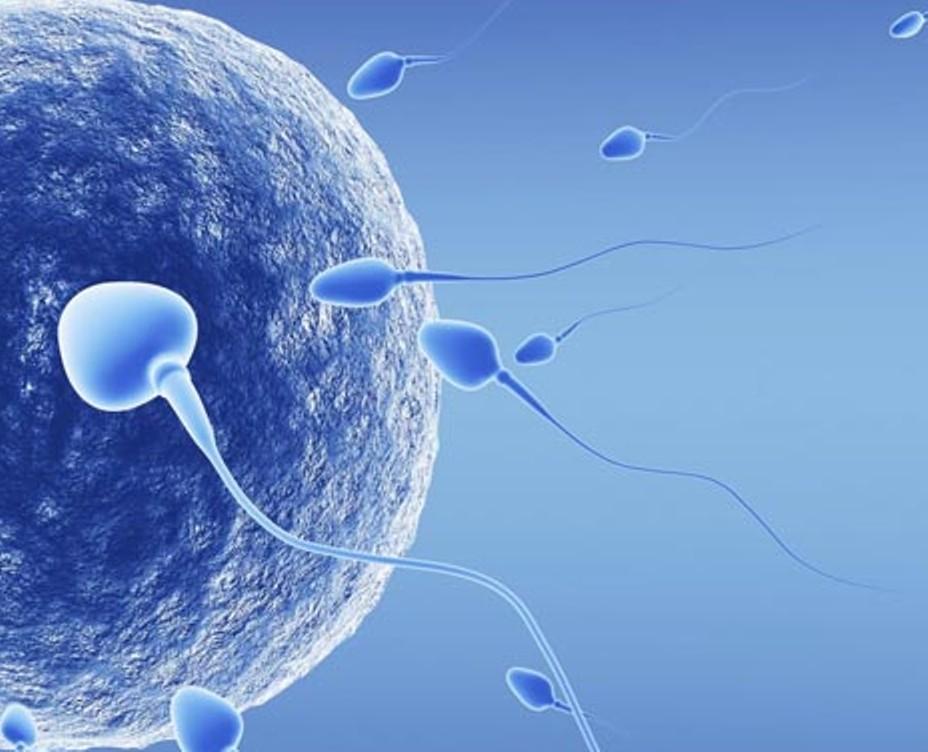 messina-procreazione-assistita