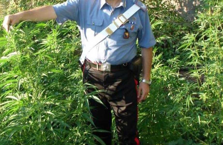 marijuana-carabinieri