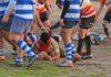amatori rugby